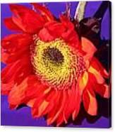 Red Sunflower Canvas Print
