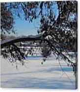 Redbud Tree In Winter Canvas Print