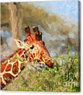 Reticulated Giraffe Kenya Canvas Print