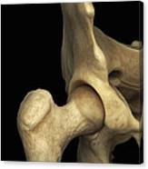Right Hip Joint Male Canvas Print
