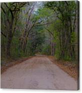Headed To The Angel Oak Canvas Print