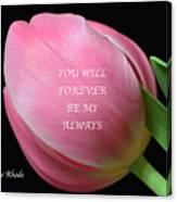 Romantic Pink Tulip Canvas Print