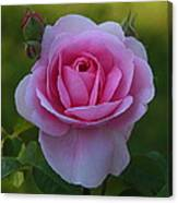 Rose Of Spring Canvas Print