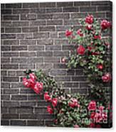 Roses On Brick Wall Canvas Print