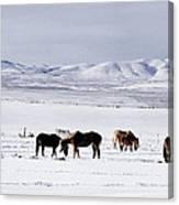 Ruby Mountain Winter Canvas Print