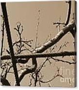 Sagamihara Asamizo Park 17b Canvas Print