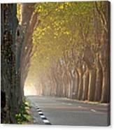 Saint Remy Trees Canvas Print