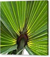 Saw Palmetto  Canvas Print