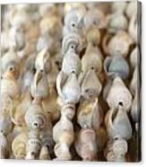 Sea Shell Decorations Canvas Print