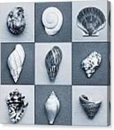 Seashell Composite Canvas Print