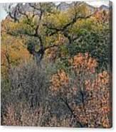 Sedona Fall Color Canvas Print