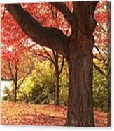 Shading Autumn Canvas Print