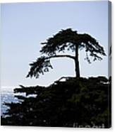 Silhouette Of Monterey Cypress Tree Canvas Print