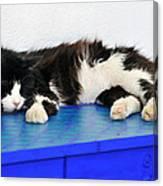 Sleeping Cat In Sifnos Island Canvas Print