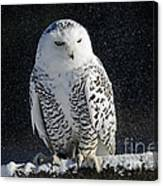 Snowy Owl On A Twilight Winter Night Canvas Print