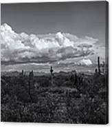 Sonoran Desert In Black And White  Canvas Print