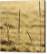 Spider Webs In Field On Tall Grass Canvas Print