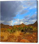 Springtime In Arizona Canvas Print