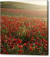Stunning Poppy Field Landscape Under Summer Sunset Sky Canvas Print