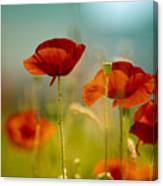 Summer Poppy Canvas Print