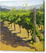 Summer Riesling Canvas Print
