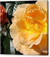 Summer's  Rose Love Canvas Print