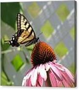 Tiger Swallowtail On Coneflower Canvas Print