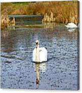 Swan In River In An  English Countryside Scene On A Cold Winter  Canvas Print
