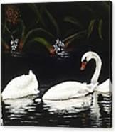Swans IIi Canvas Print