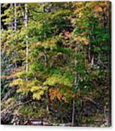 Tennessee Autumn Stream Canvas Print