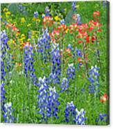 Texas Wildflowers Canvas Print