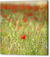 The First Poppy Of The Field Canvas Print