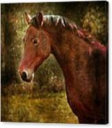 The Horse Portrait Canvas Print