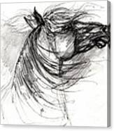 The Horse Sketch Canvas Print