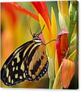 The Postman Butterfly Canvas Print