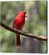 The Singing Cardinal Canvas Print