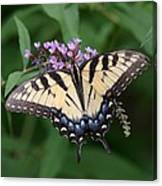 Tiger Swallowtail On Butterfly Bush Canvas Print