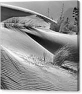 Too Windy Canvas Print
