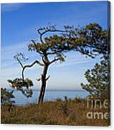 Torrey Pines State Park - California Canvas Print