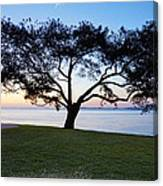 Tree By The Bay Canvas Print