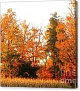 Trees Of Fall Canvas Print