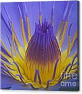 Tropic Water Lily 16 Canvas Print