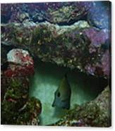 Tropical Fish And Coral Canvas Print