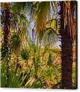 Tropical Forest Palm Trees In Sunlight Canvas Print