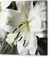Vase White Lilies With Falling Petals As They Die Canvas Print