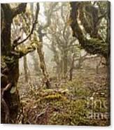 Virgin Mountain Rainforest Of Marlborough Nz Canvas Print