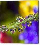 Water Drops On A Flower Stem Canvas Print