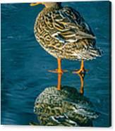 Water Walker Canvas Print