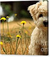 West Highland White Terrier Painting Canvas Print