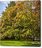 Westonbirt Arboretum Canvas Print